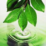 ecology_291210