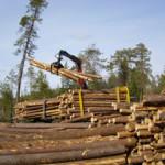 В защитные леса приходит госрегулирование