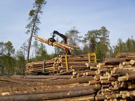 Порядок предоставления древесины жителям Башкирии оказался незаконным