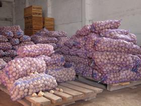 В Стерлитамаке на заключительной сельхозярмарке было продано 29 тонн картофеля