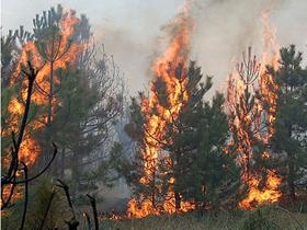 С начала пожароопасного периода в Башкирии произошло всего 2 природных пожара