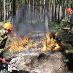 В Башкирии за год зарегистрировано 220 лесных пожаров