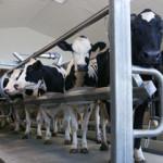 В Башкирии на развитие скотоводства направят 6,7 млн рублей