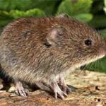В Стерлитамаке зафиксировано четыре случая заболевания мышиной лихорадкой
