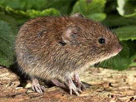 В Башкирии снизилась заболеваемость «мышиной лихорадкой», но стало больше случаев ОРВИ