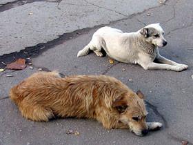 В Башкирии утвердили новые правила отлова бездомных животных