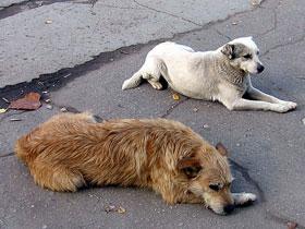 В Стерлитамаке на отлов бездомных животных направят более 200 тысяч рублей