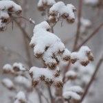 snow_041214