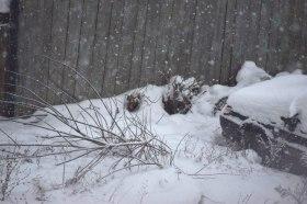 snow_171214