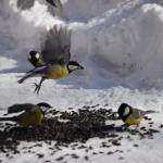 birds-ptici_260215