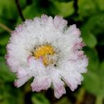 flower_180315