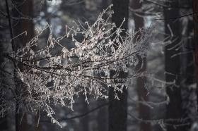 iney_snow_sneg_260215