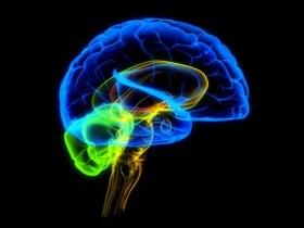 mozg_brain