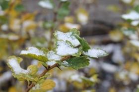 first-snow_221114
