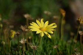 flower-210415