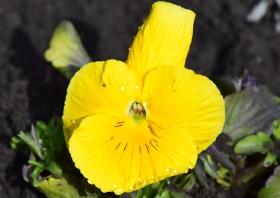 flower-cvetok_120415
