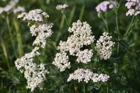 flowers_190415