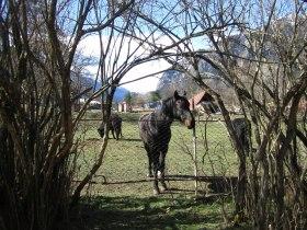 horses_070415