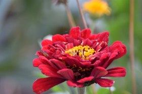 red-flower_180415