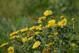 yellow-flowers_180415
