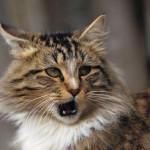 cat_kot_koshka