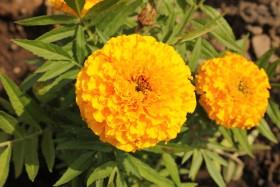 flowers_170615