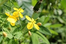 yellow-flower_100615