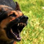 В Башкирии пенсионерка получит денежную компенсацию за нападение собаки
