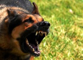 В Стерлитамаке от укусов животных пострадал 31 человек