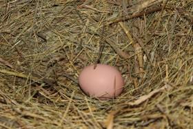 egg_yaiso_161215