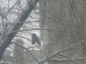 В Стерлитамаке возле здания университета поселилась сова