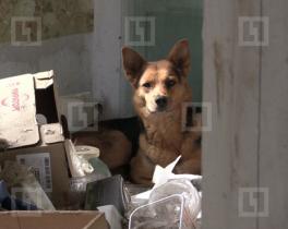В Стерлитамаке собака не дает рабочим снести аварийный дом