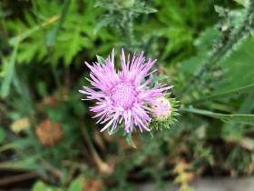 flower_140718