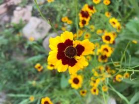 flower_260718