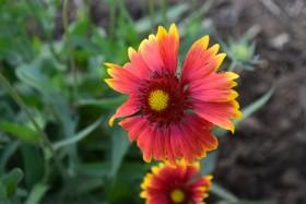 flower_300718