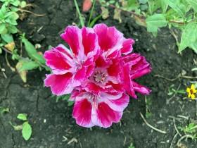 flower_040818