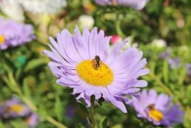 flower_090915
