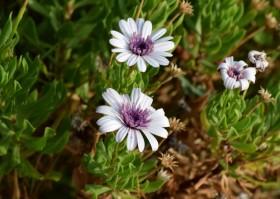flowers3_040815