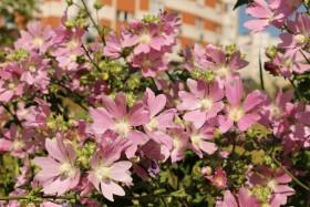 flowers_090715