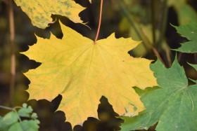 fall-autumn_12300914