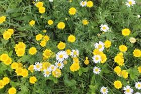 flowers_110817