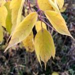 autumn_271018