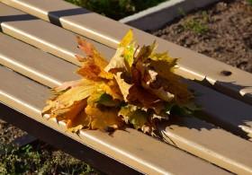 osen-autumn_230915