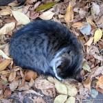 cat-osen_161118