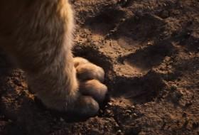 lion_261118