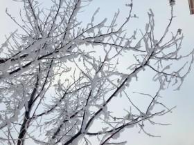 sneg-zima-derevo_201218