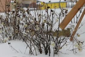 sneg-zima-kust_141215