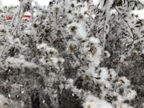 sneg-zima_181218