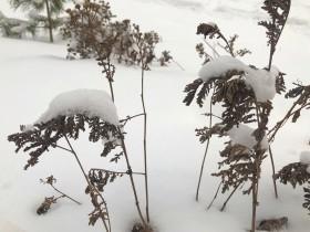 sneg-kusty_150119