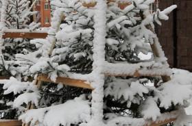 snow-elka_301115